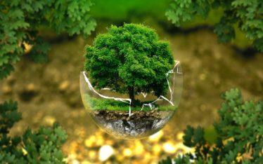 forêt propre pays de fontainebleau